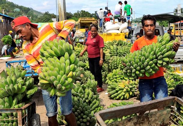 Мир без бананов. Угроза самому популярному фрукту 2